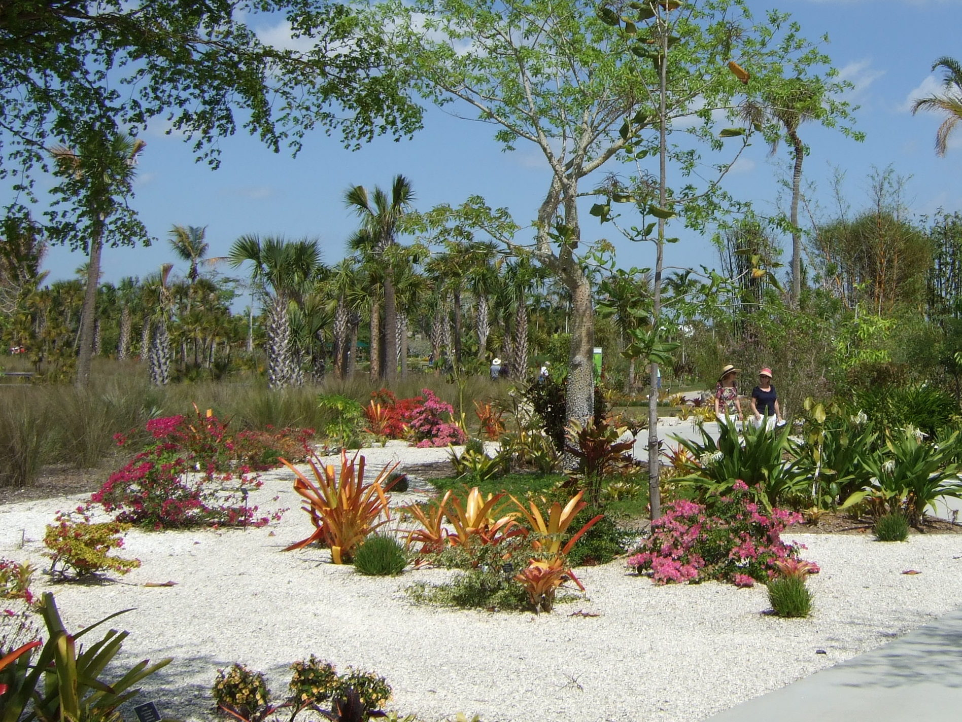 Bromeliads and limestone walk in Naples Botanical Garden