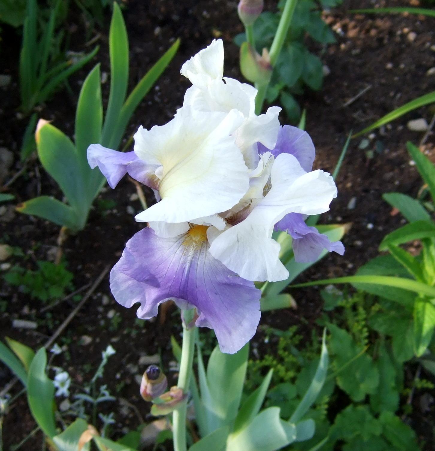 Chester garden club we focus on growing gardens and gardeners in 20110619gardenrecordef0016 izmirmasajfo