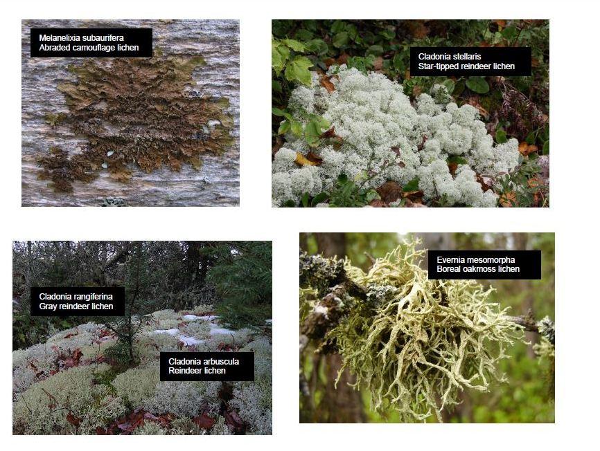 4 More lichens