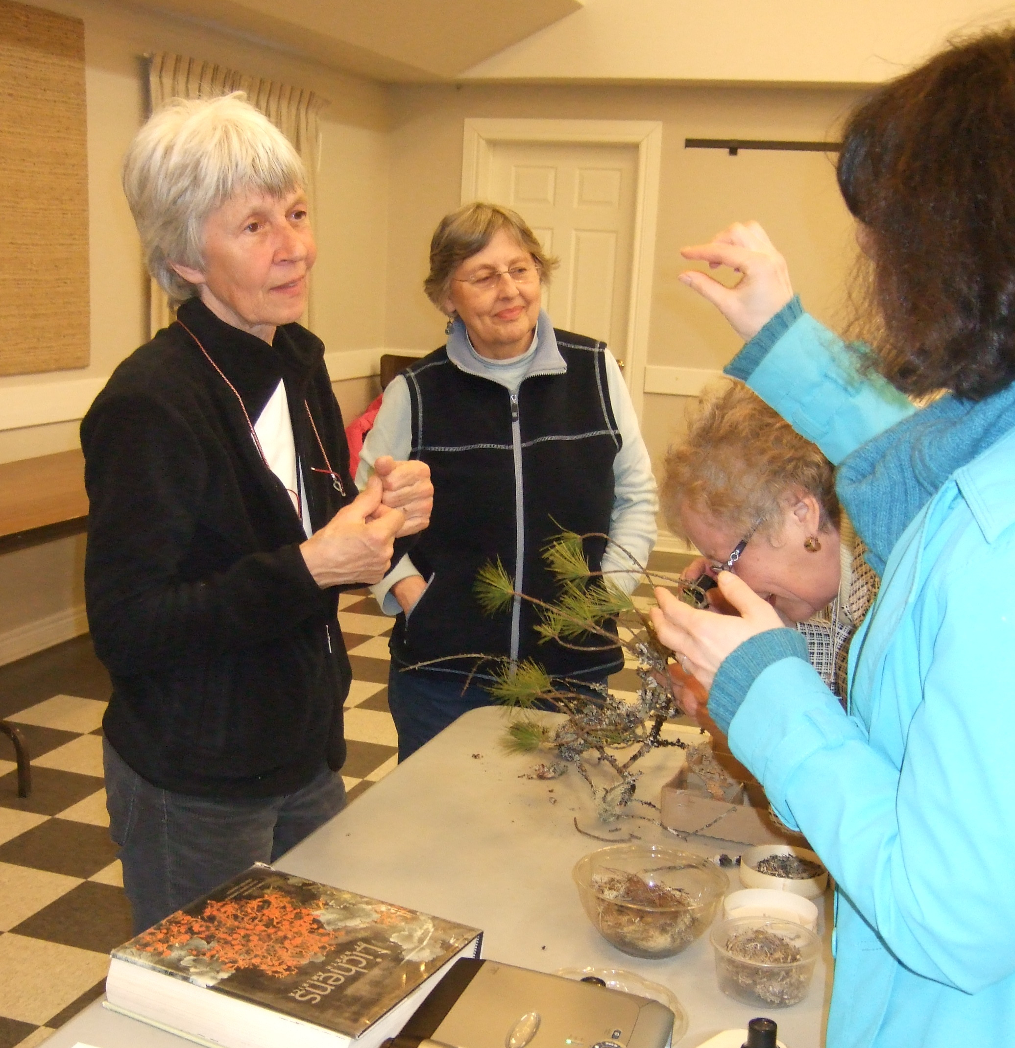 Checking out lichen specimens.