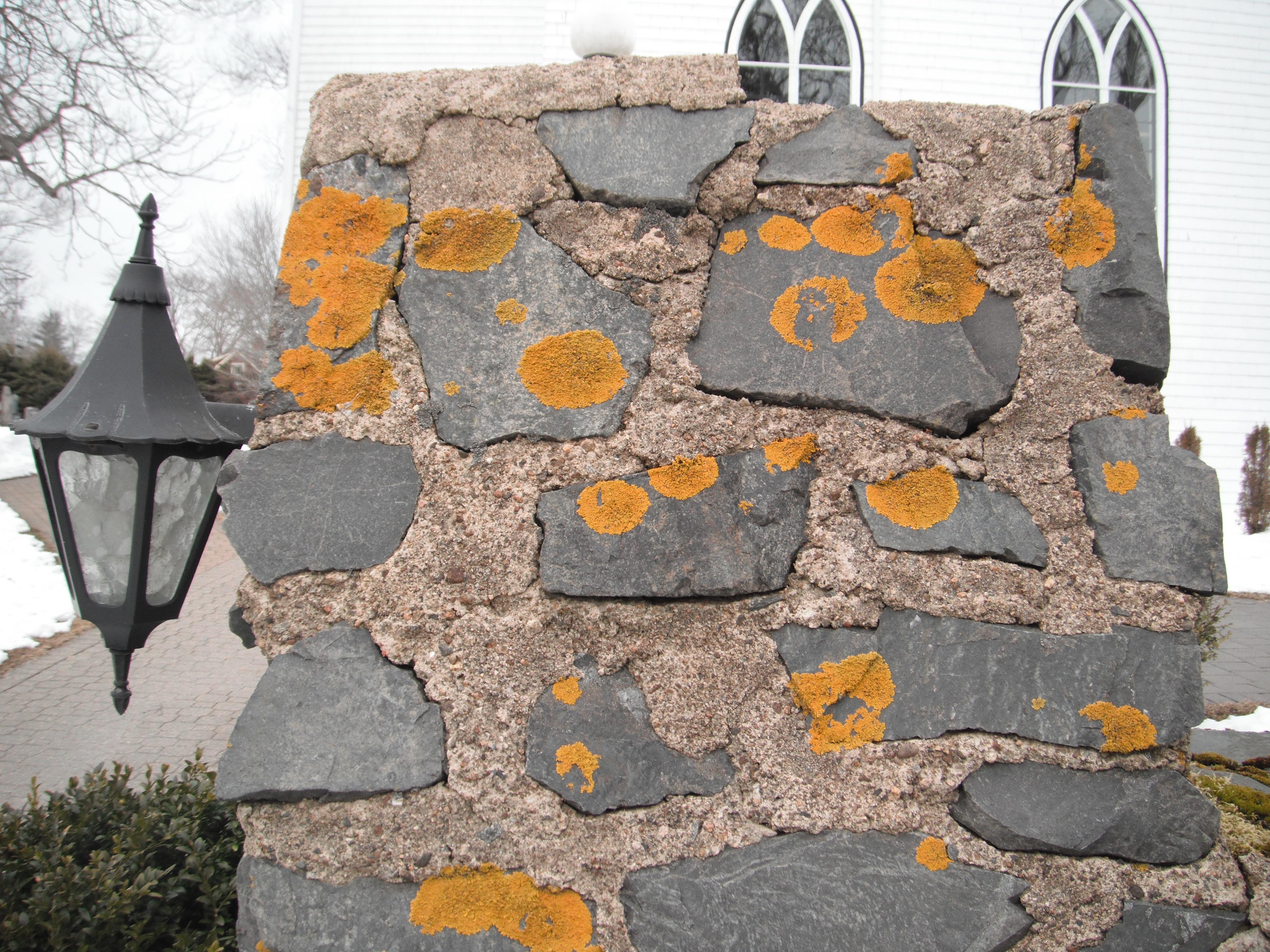Lichen Xanthoria