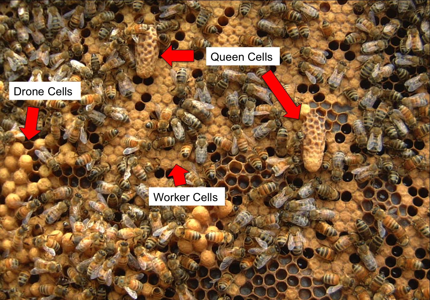 Queen Bee Health Food Store