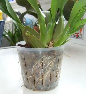 Plastic orchid liner pot