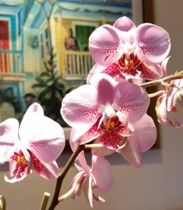 house orchid