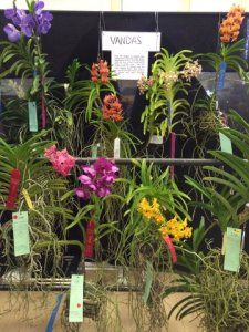 Vanda Alliance display