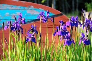 dory and iris