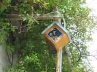 Chickadee settling in