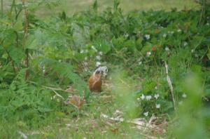 May 29th Nesting material IMGP2022