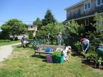 June 27th Cove Garden Planting the Haase Garden (2)