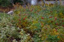 cove-garden-nov-17th-imgp4132