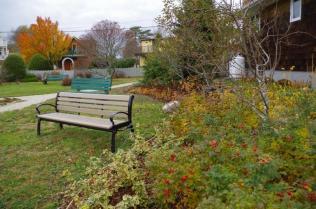 cove-garden-nov-17th-imgp4133