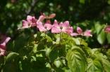 june-18th-tangled-garden-imgp2414