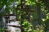 june-18th-tangled-garden-imgp2422