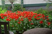 may-29th-annapolis-historic-gardens-imgp2030