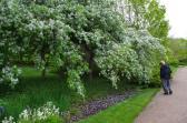 may-29th-annapolis-historic-gardens-imgp2055