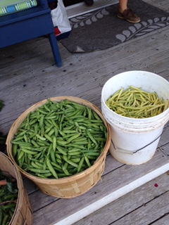 Beans ready for pickling