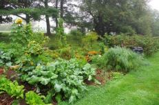 Gardens continue to produce in September