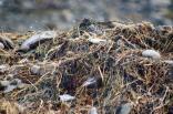 Sea weed mix
