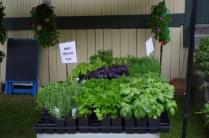 Beautiful healthy Plants