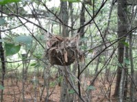 Look at the nesting material