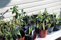 Houseplants for the indoor gardener