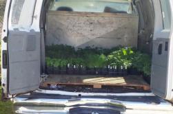 Plants arrive